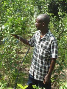 Cura delle piante in Senegal