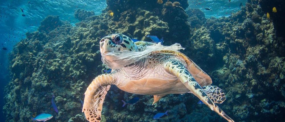 World Oceans Day - Plastic world - Saeed Rashid – Underwater Photographer